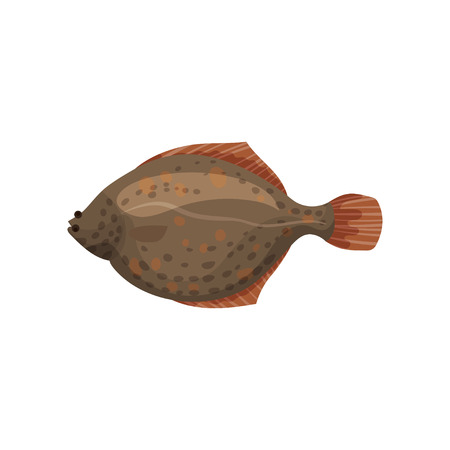 Detailed flat vector design of brown flounder fish, side view. Sea animal. Delicious marine product. Seafood theme Stock Photo