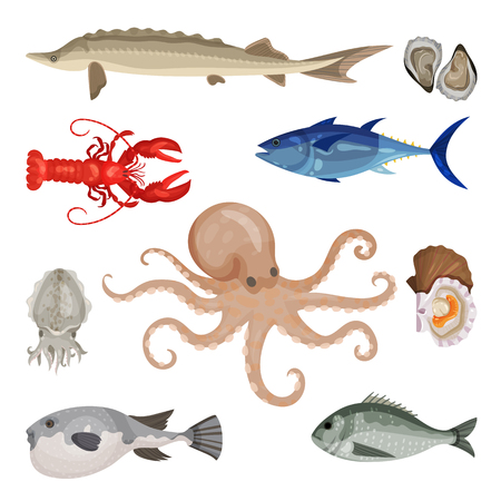 Detailed flat vector set of different seafood. Edible marine products. Sea creatures. Fish, lobster and mollusks