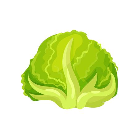 Sałata lodowa świeże liście sałaty, zdrowe organiczne jedzenie wegetariańskie, wektor ilustracja na białym tle.