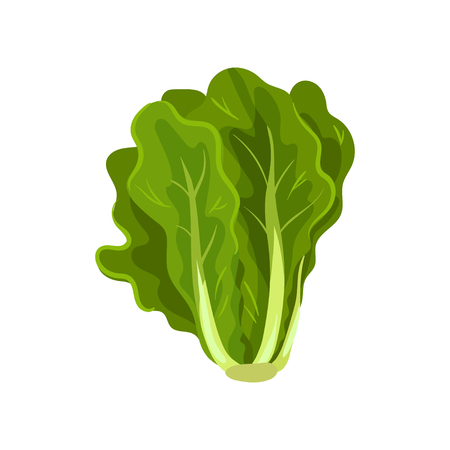 Green fresh salad leaves, healthy organic vegetarian food, vector Illustration isolated on a white background. Vettoriali