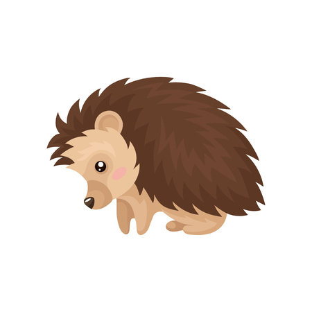 Cute hedgehog, lovely prickly animal cartoon character vector Illustration isolated on a white background. Vector Illustration