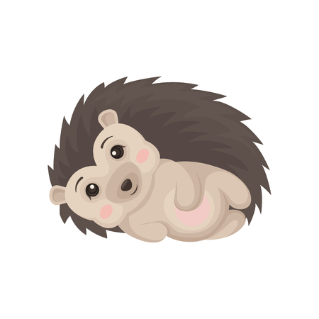 Cute hedgehog lying on its side, lovely prickly animal cartoon character vector Illustration isolated on a white background.