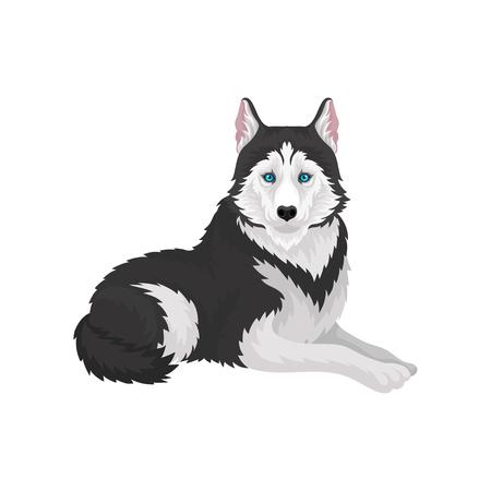 Siberian Husky, white and black purebred dog animal vector Illustration on a white background
