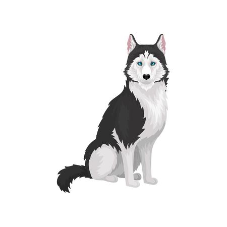 Perro de pura raza Husky siberiano con ojos azules vector ilustración sobre un fondo blanco Ilustración de vector