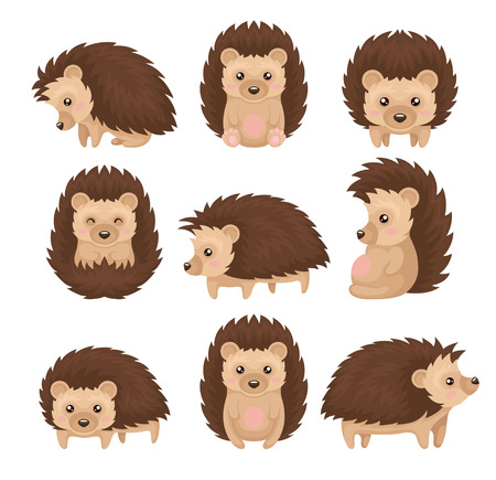 Cute hedgehog in various poses set, prickly animal cartoon character with funny face vector Illustration isolated on a white background.