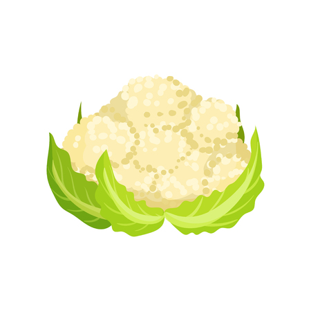 Icon of ripe cauliflower with bright green leaves. Organic and healthy food. Natural farm product. Fresh garden vegetable. Colorful vector illustration in flat style isolated on white background. 일러스트