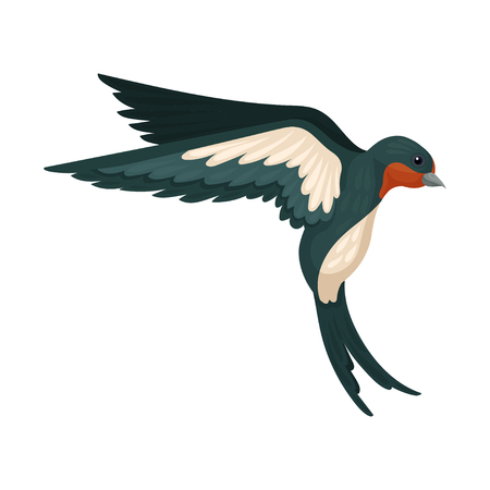 Flying swallow bird with colored plumage, back view vector Illustration on a white background Vectores