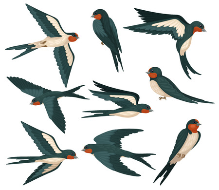 Flying swallow birds in various views set, flock of birds with colored plumage vector Illustration on a white background