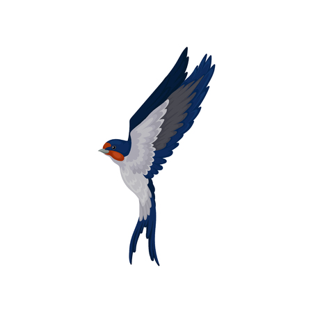 Flying swallow, graceful bird with red plumage around the beak and dark blue wings vector Illustration on a white background