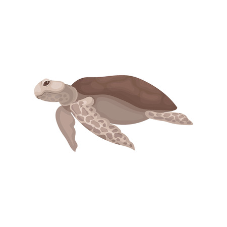 Turtle with brown shell, tortoise reptile animal, side view vector Illustration on a white background