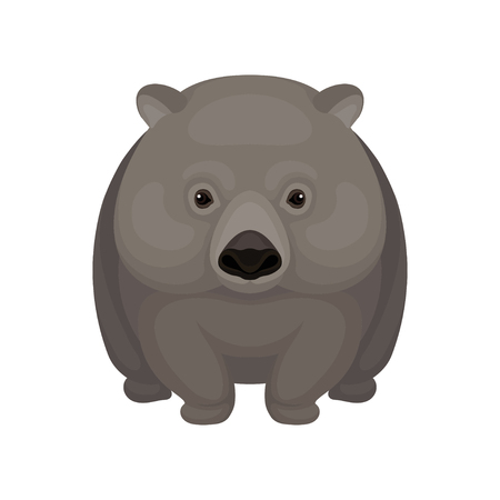Illustration of cute gray wombat. Small Australian marsupial bear with short legs. Wildlife theme. Graphic element for children book. Detailed vector icon in flat style isolated on white background.