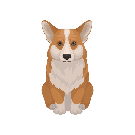 Cute Welsh corgi sitting isolated on white background. Dog with fluffy red coat and short legs. Domestic animal. Graphic element for poster of pet store. Detailed vector illustration in flat style. Ilustrace