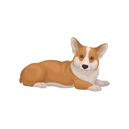 Welsh corgi lying on floor and attentively looking, side view. Cute home pet. Dog with red coat and short legs. Domestic animal. Detailed vector illustration in flat style isolated on white background
