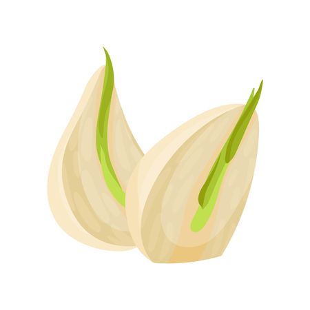 Illustration of two sprouted cloves of garlic. Aromatic plant. Culinary ingredient. Natural product. Used in food cooking and medicine. Colorful vector icon in flat style isolated on white background.
