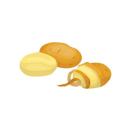 Ripe raw peeled and unpeeled potatoes. Fresh vegetable. Organic farm product. Natural food. Flat vector design