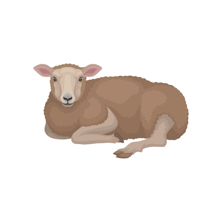 Cute young sheep lying on the ground, side view. Domestic mammal creature with brown woolly coat. Livestock farming. Animal husbandry theme. Colorful flat vector design isolated on white background.