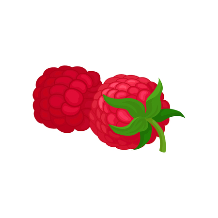 Detailed illustration of two fresh raspberries. Juicy summer fruit. Natural food. Tasty garden berry. Organic product. Cartoon vector design. Colorful icon in flat style isolated on white background.