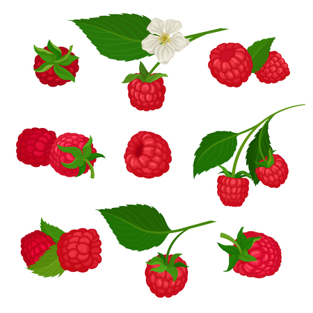 Set of raspberry icons. Natural food. Delicious summer berry. Organic and healthy product. Graphic elements for tea or yogurt packaging. Colorful flat vector illustrations isolated on white background Ilustração
