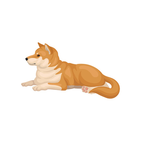 Illustration of Shiba Inu lying on the ground, side view. Home pet. Cute dog with red-beige coat and fluffy tail. Domestic animal. Detailed vector icon in flat style isolated on white background. Illustration