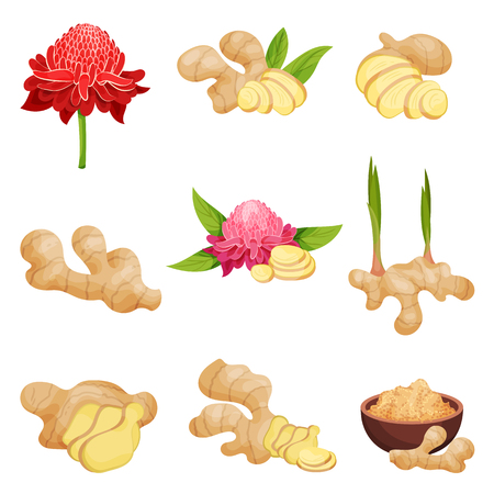 Set of ginger icons. Fresh roots with slices, flowers and powder. Aromatic spice. Natural food. Healthy product. Cooking ingredient. Detailed flat vector illustrations isolated on white background.