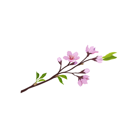 Detailed illustration of sakura branch with small pink flowers and green leaves. Cherry blossom. Nature theme. Graphic element for postcard. Vector icon in flat style isolated on white background. Illustration