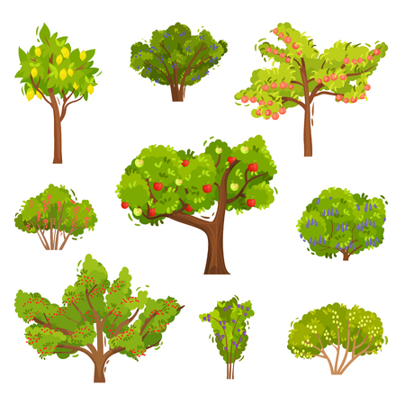 Flat vector set of fruit trees and berry bushes. Agricultural plants. Elements for book about gardening