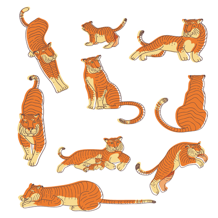 Set of hand drawn tigers in different actions. Large wild cat with orange striped coat and long tail. Predatory animal. Kids drawing. Wildlife theme. Vector illustrations isolated on white background. Çizim