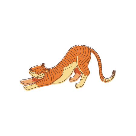 Adorable tigre naranja en pose de estiramiento. Gran gato montés con pelaje a rayas. Animal depredador. Diseño vectorial dibujado a mano Ilustración de vector
