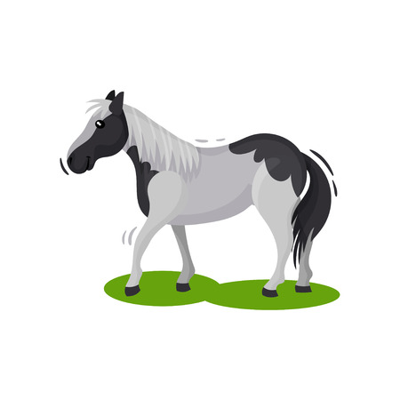 Beautiful gray horse with big black spots walking by green grass, side view. Hoofed mammal animal. Flat vector design Illustration