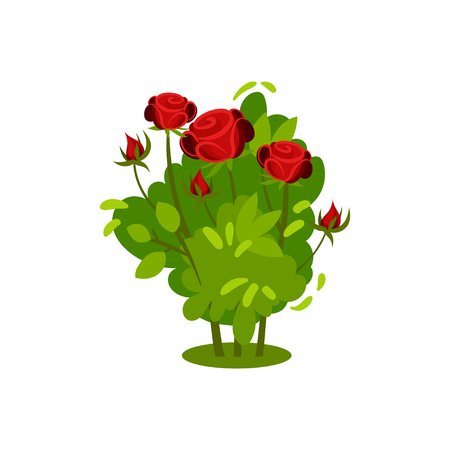 Small bush with beautiful bright red roses. Green shrub with blooming flowers. Natural element. Garden plant. Nature and botany theme. Colorful flat vector illustration isolated on white background. Ilustracja