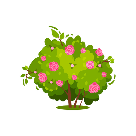 Illustration of green bush with gentle pink roses. Beautiful garden flowers. Nature and flora theme. Natural element for landscape design. Colorful flat vector icon isolated on white background.