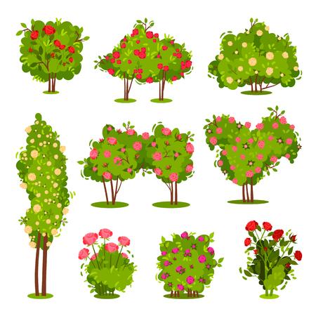 Kolekcja krzewów róż. Kwitnące rośliny ogrodowe. Zielone krzewy o pięknych kwiatach. Elementy krajobrazu. Motyw natury i botaniki. Ilustracje wektorowe płaskie kolorowe na białym tle. Ilustracje wektorowe