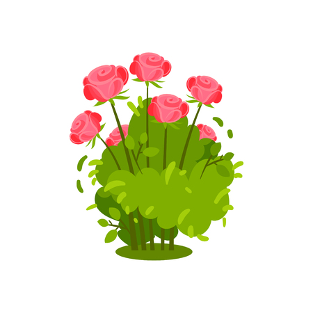 Small green bush with beautiful bright pink roses. Flowering plant. Garden flowers. Natural element. Nature and flora theme. Colorful vector illustration in flat style isolated on white background.
