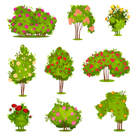 Set of roses bushes. Green shrubs with beautiful flowers. Garden plants. Natural landscape elements. Spring season. Nature theme. Colorful flat vector illustrations isolated on white background.