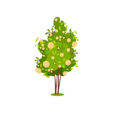Cute green bush with roses. Flowering garden plant. Beautiful flowers. Nature and flora theme. Natural element for landscape design. Colorful vector icon in flat style isolated on white background. Ilustracja