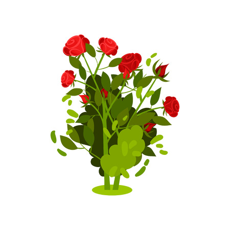 Illustration of small bush with bright red roses and green leaves. Flowering plant. Beautiful garden flowers. Nature and botany theme. Colorful vector icon in flat style isolated on white background.
