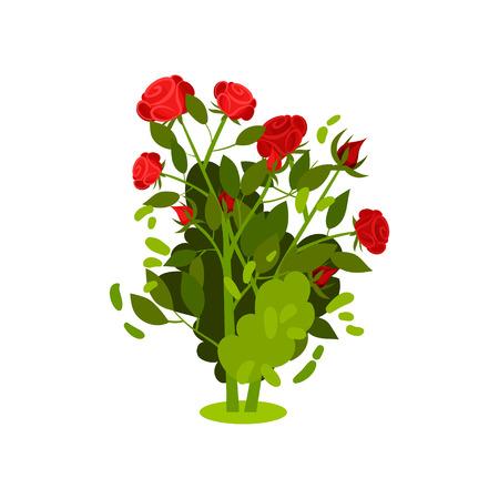 Ilustración de un pequeño arbusto con rosas rojas brillantes y hojas verdes. Planta floreciendo. Hermosas flores de jardín. Tema de naturaleza y botánica. Icono de vector colorido en estilo plano aislado sobre fondo blanco.