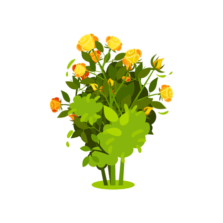 Icon of bush with bright yellow-orange roses and green leaves. Small shrub with beautiful flowers. Garden plant. Nature and botany theme. Colorful flat vector illustration isolated on white background