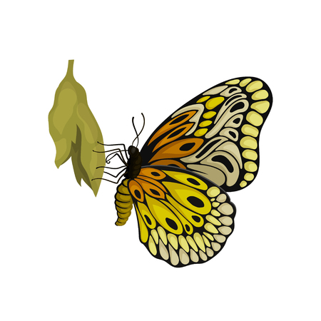 Newly born butterfly sitting on green cocoon. Flying insect with two pairs of wings with beautiful pattern. Nature and entomology theme. Colorful flat vector illustration isolated on white background.