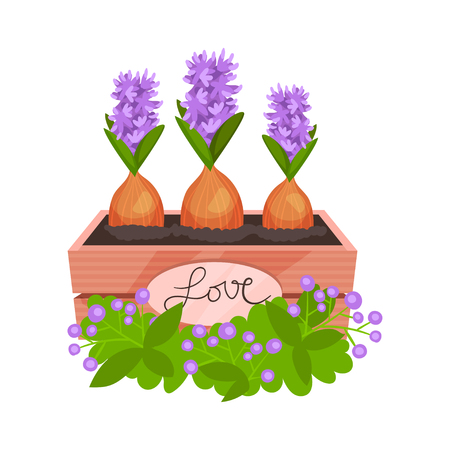 Three blooming hyacinths in wooden box with green decor. Beautiful spring flowers. Natural composition. Gardening theme. Cartoon vector design. Colorful flat illustration isolated on white background.