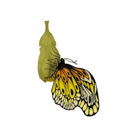 Beautiful newly born butterfly sitting on it s cocoon. Insect with two pairs of wings. Flying creature. Nature and entomology theme. Graphic element for poster or book. Isolated flat vector design. Illustration