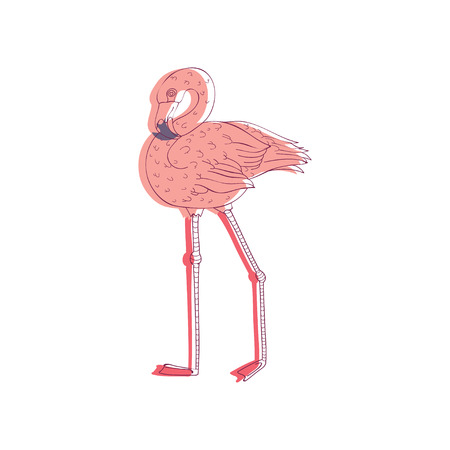 Beautiful pink flamingo. Exotic bird with long neck and legs. Wild creature. Wildlife theme. Graphic element for summer poster or postcard. Hand drawn vector design isolated on white background.