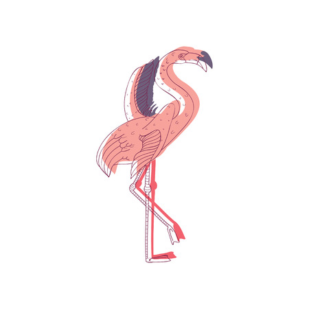 Pink flamingo with wide open wings standing on one leg, side view. Beautiful topical bird. Wildlife and fauna theme. Graphic element for postcard. Hand drawn vector design isolated on white background