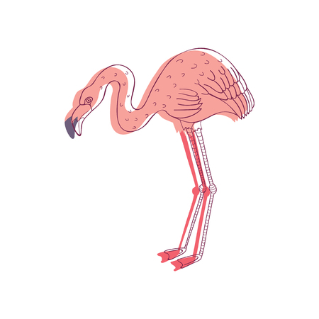 Linear illustration of pink flamingo, side view. Tropical bird with long legs and neck. Wild creature. Wildlife theme. Graphic element for poster. Hand drawn vector design isolated on white background