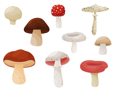 Ensemble de champignons différents. Plante forestière. Champignons comestibles et vénéneux. Produit naturel. Éléments graphiques pour livre ou affiche. Icônes vectorielles de dessin animé. Illustrations plates isolées sur fond blanc.