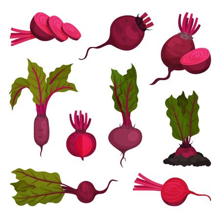 Cartoon beet on white background. Beetroot concept. Root vegetable and organic food. Seasonal harvest beets. Vector flat illustration.