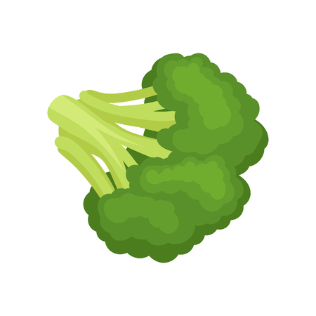 Broccoli concept. Vegetarianism and organic food. Green vegetable on white background. Vector flat illustration.