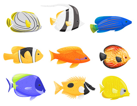Collection of colorful aquarium fish on white background. Water life. Cartoon exotic fish. Aqua concept. Fauna of underwater world. Vector flat illustration.