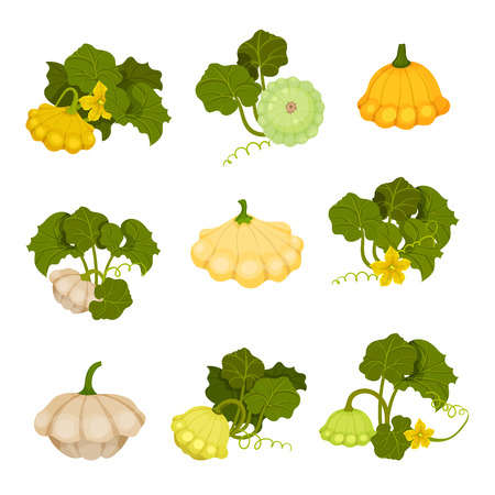 Patisson set. Organic food concept. Vector illustration.
