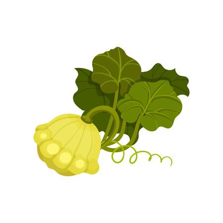 Patisson concept. Organic food concept. Vector illustration. Ilustração